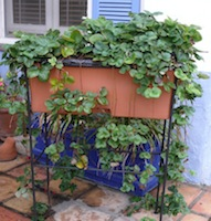 High Quality Garden Containers
